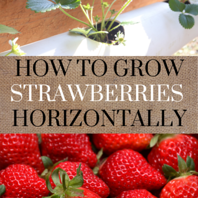 HOW TO GROW STRAWBERRIES HORIZONTALLY | GROWING STRAWBERRIES IN A SMALL SPACE